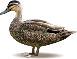 Image shows bird has long and curved beak – Choice C