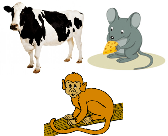 Animal group classified as omnivore – Choice B