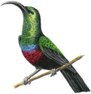 Image shows bird has long and curved beak – Choice B