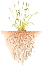 Plants have tap root or fibrous root – Choice A