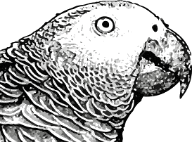 Image shows the face of bird – Choice B
