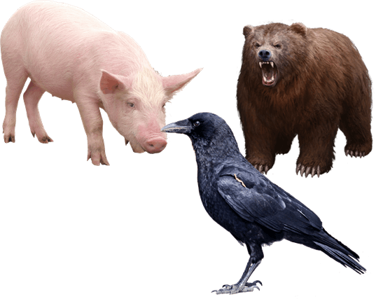 Animal group classified as omnivore – Choice D