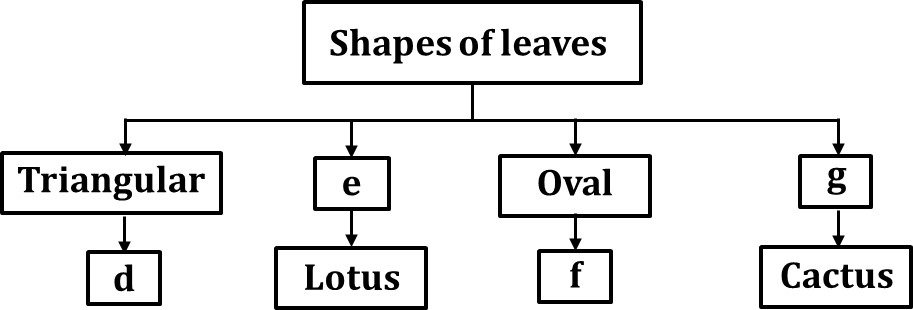 Given flowchart shows shapes of leaves