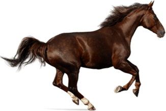 Image shows a horse