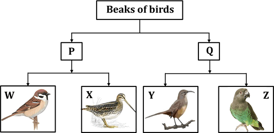 Figure shows classification chart of birds