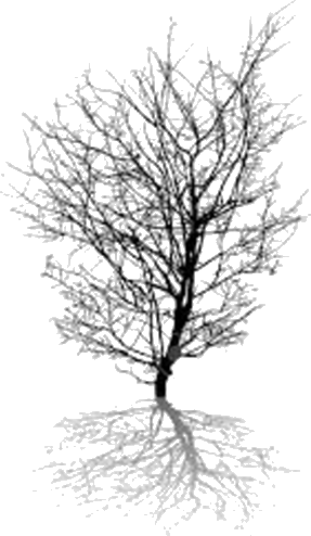 Image of the shadow of the tree – Choice B