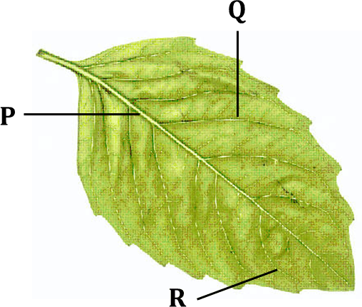 Figure shows leaves with labelled