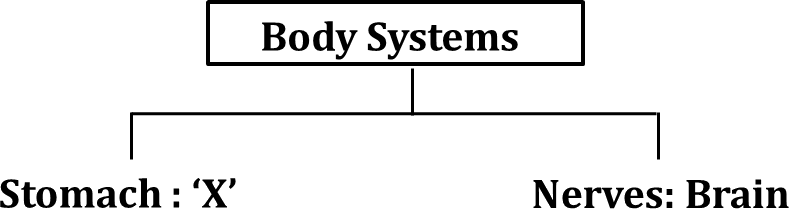 Given classification table shows human body systems