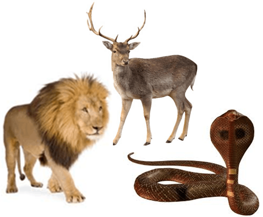 Animal group classified as omnivore – Choice C