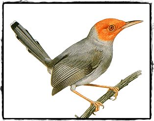 Figure shows the bird