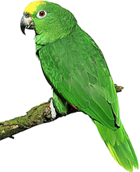 Image shows the picture of bird