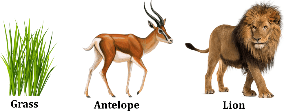 Image shows the grass, antelopes and lion