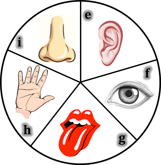 sensory organs Sense organs allow animals to sense changes in the environment around them and in their bodies so that they can respond appropriately they enable animals to avoid hostile environments, sense the presence of predators and find food animals can sense a wide range of stimuli that includes, touch .