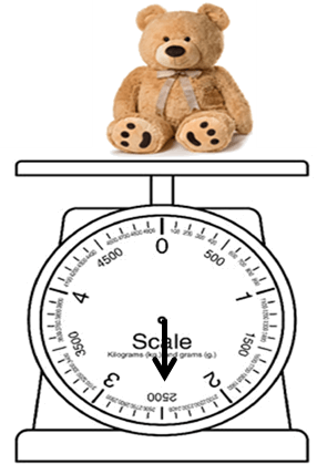 Figure shows the weight of the teddy bear