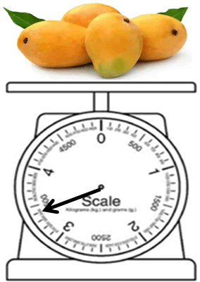 Image shows the weight of the mango
