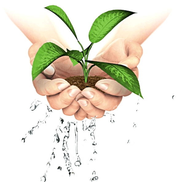 Figure shows plant in hand