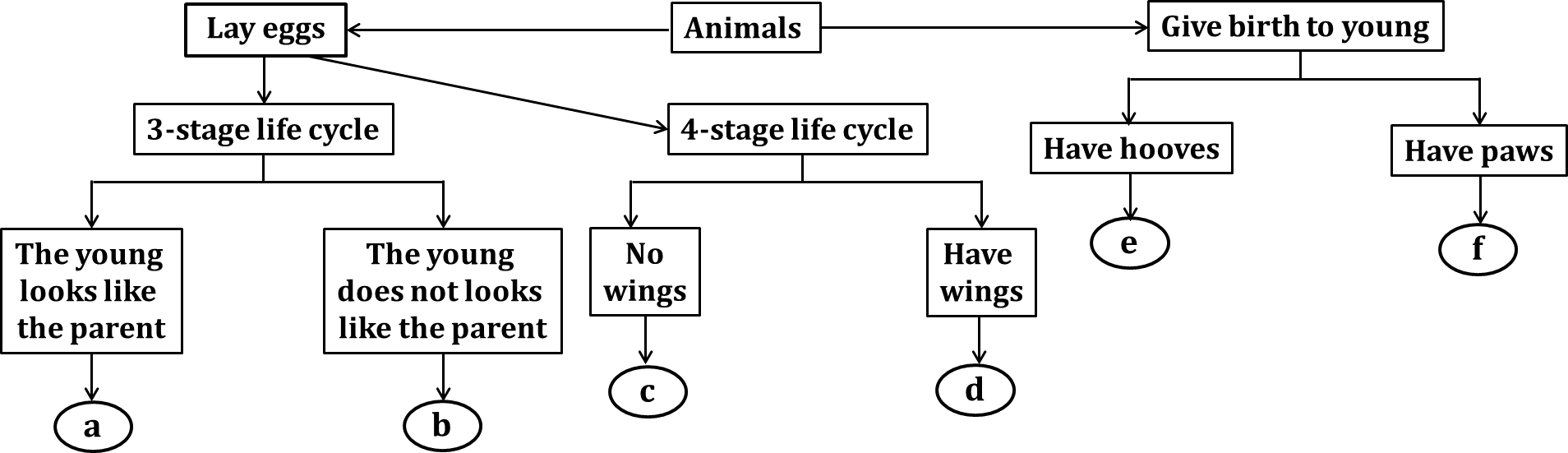 Flowchart shows the characteristics of animals