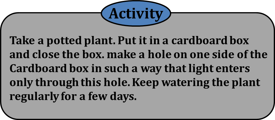 Activity shows the most likely about the plant