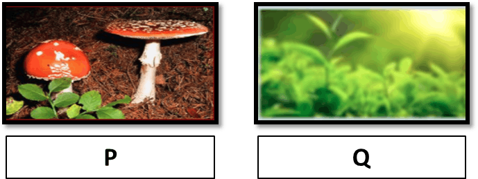 Image showing different organisms.