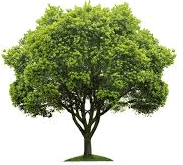This image shows that the tree – Choice D