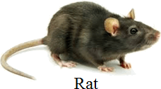 This image shows the small animal – Choice D