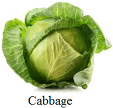 This image is cabbage choice C