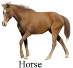 This image shows the Horse