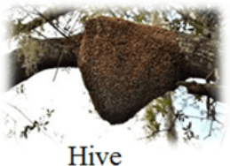 This image shows the Hive