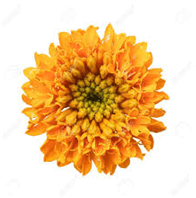 This image is a flower – Choice A