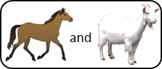This image shown two pairs of animals – Choice A