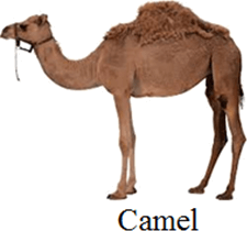 This image of animal used for carry or not – Choice D