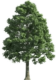 This image shows that different type of tree – Choice A
