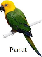 This animal represent the wild or pet animal – Choice B