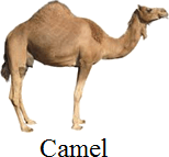 This image of animals used to carry – Choice B