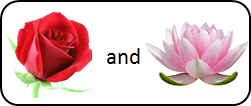This figure shown pair of two flowers – Choice A