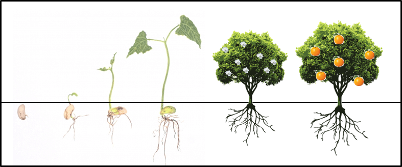 This figure shows the growth of a plant