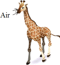 This animal shows the action – Choice D