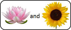 This figure shown pair of two flowers – Choice D