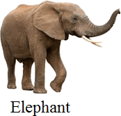 This picture of animal is big or small – Choice C