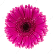 This image is a flower – Choice B