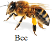 This image shows the Bee