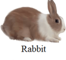This image shows the Rabbit