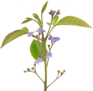 This image shows that flower plant – Choice C
