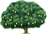 This image show that the tree with leaves – Choice D