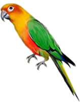 This bird is shown from pictograph – Choice B