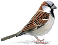 This bird is shown from pictograph – Choice D