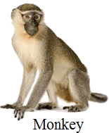 This image shows that the monkey