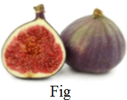 This image is Fig choice A