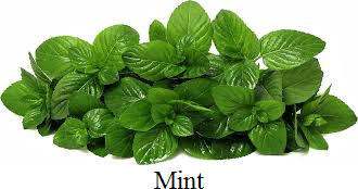 This image of mint choice D