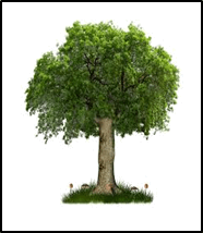 This image shows the tree in box